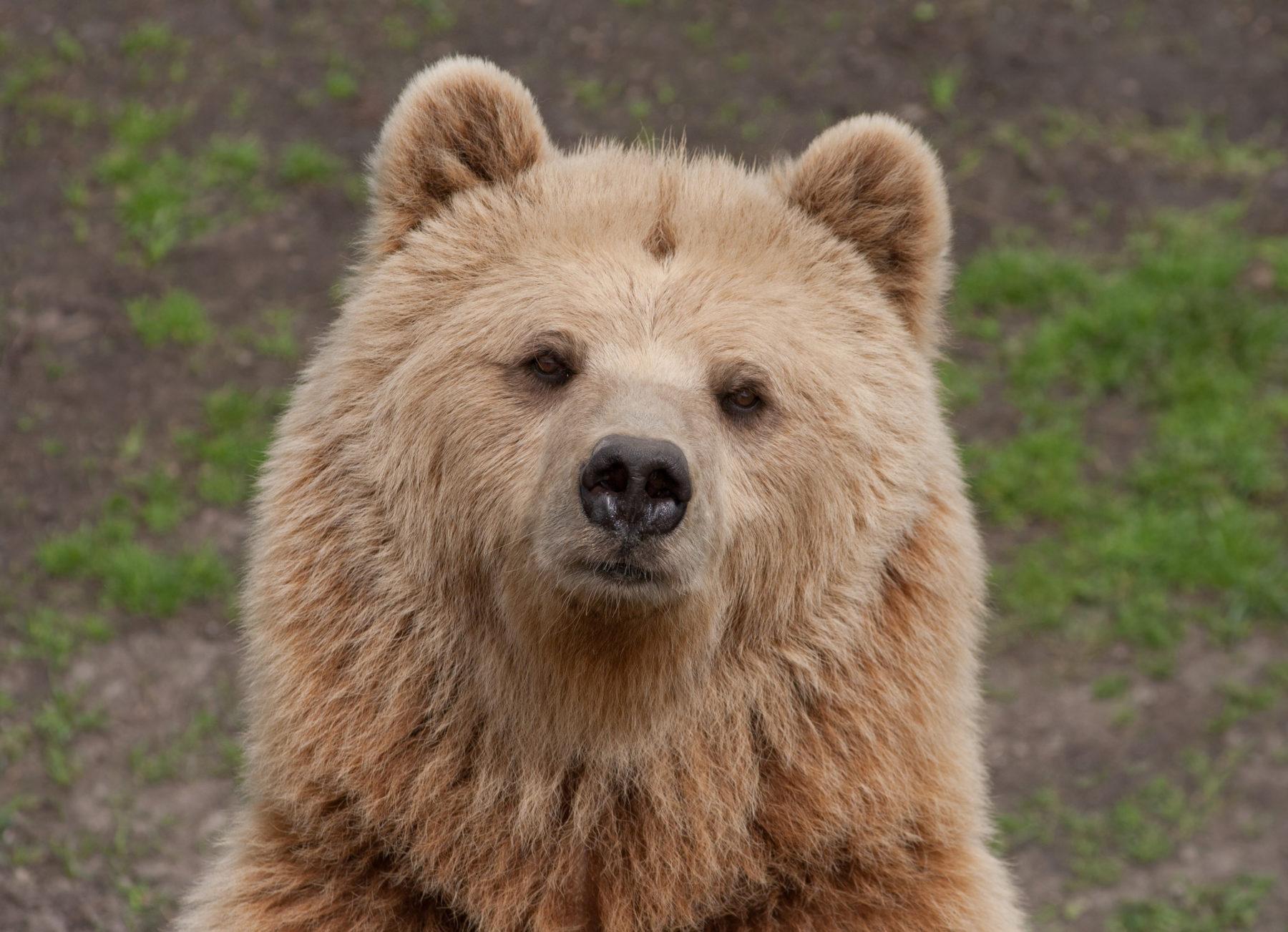 Ausflugstipps für Münchner Familien: Bär im Wildpark Poing // HIMBEER