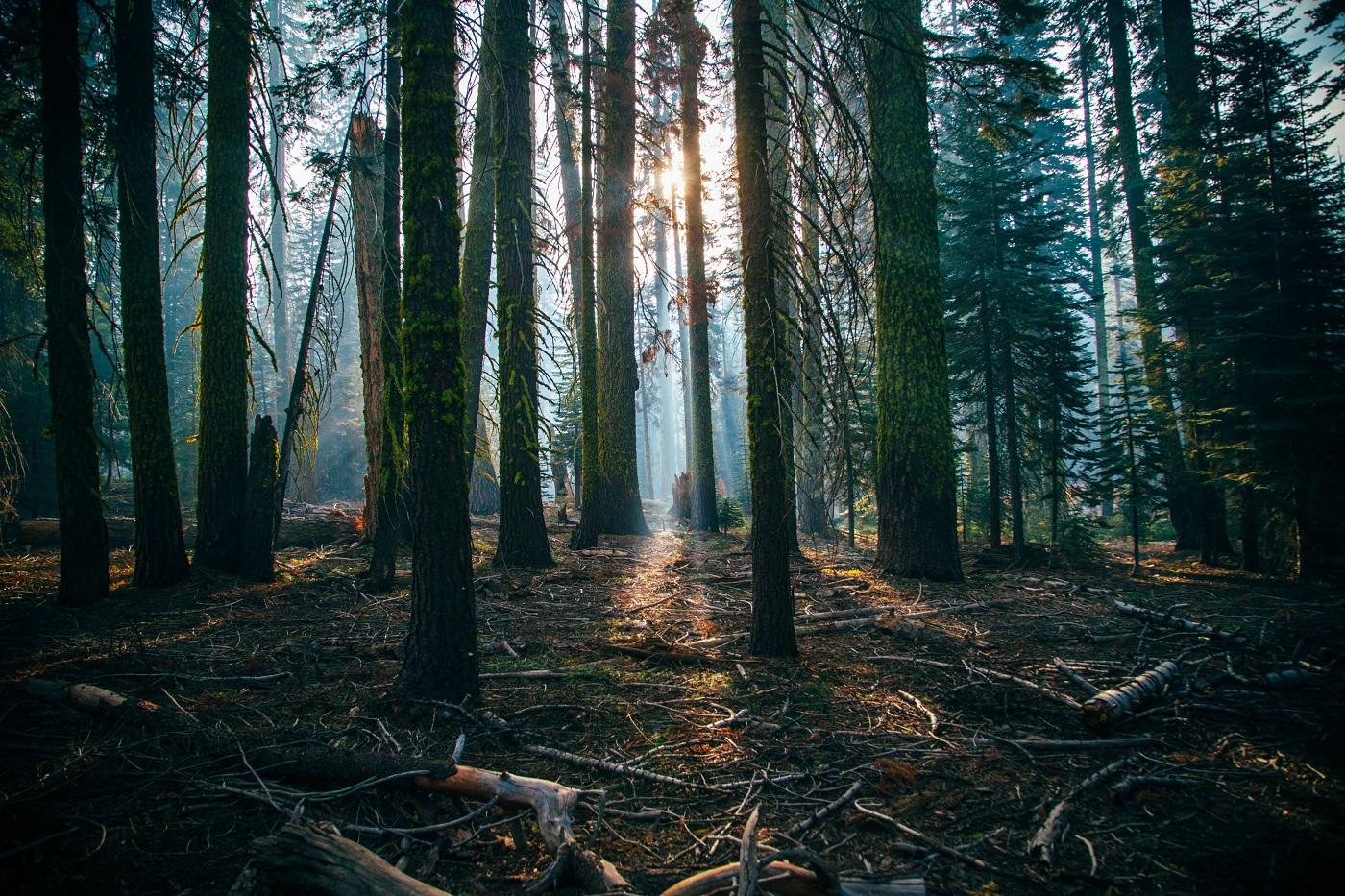 Wald Lichteinfall Ausflugstipps