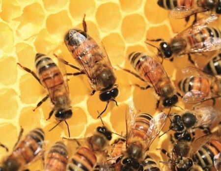 Bienen und unsere Umwelt | Muenchen mit Kind