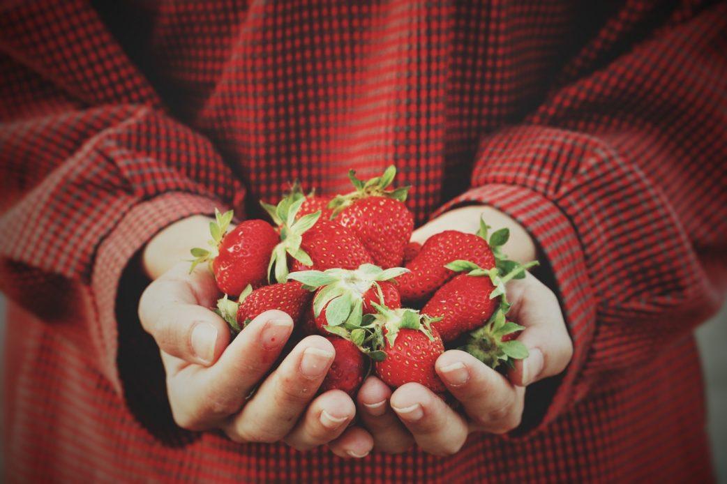 Erdbeerfelder Erdbeeren Hände | München mit Kind