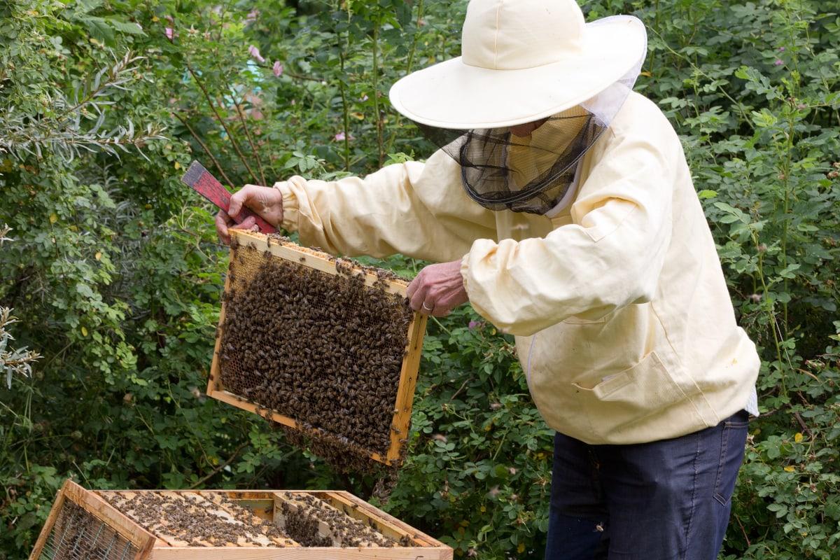 Imkerin bei Bienen // HIMBEER
