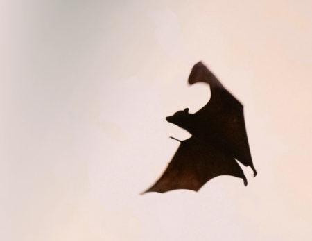 Fledermaus Fledermäuse // Muenchen mit Kind