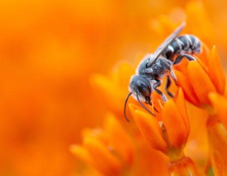 Alles über die Wespe: Wespe im Blumenmeer // HIMBEER