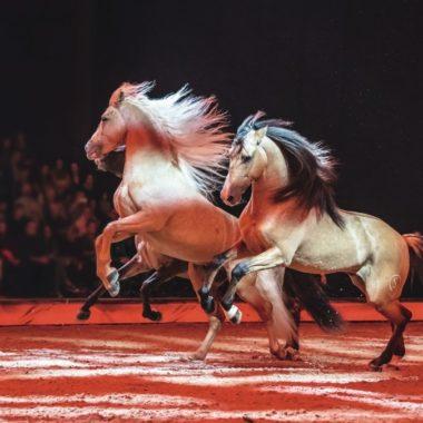 Pferde Show // Muenchen mit Kind