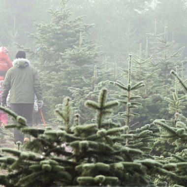 Tannenhof Oberweilbach, christbaum, Weihnachtsbaumschlagen,