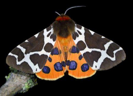 Schmetterlinge // Muenchen mit Kind