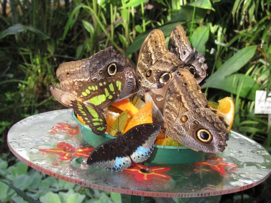 Schmetterlinge Futter Bunt // HIMBEER
