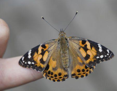 Schmetterlinge Kind // Muenchen mit Kind