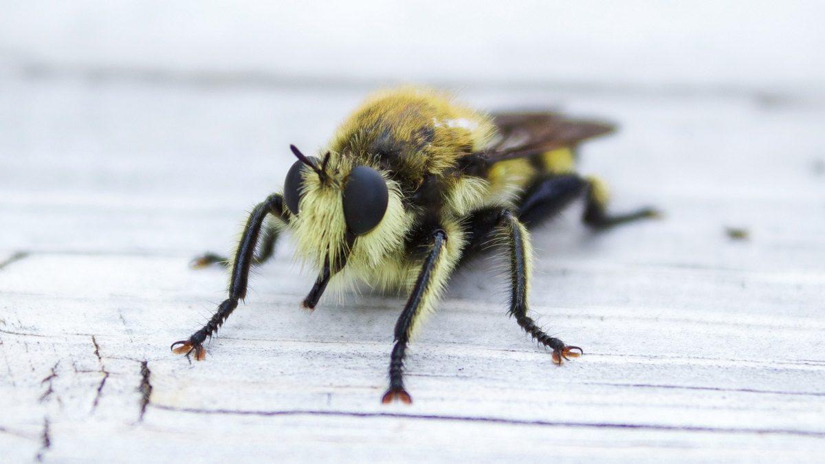 Rettet die Bienen, Volksbegehren, Artenvielfalt, Biene, Closeup // München mit Kind