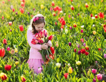 Tulpengarten Muenchen Blumen Fruehling // HIMBEER