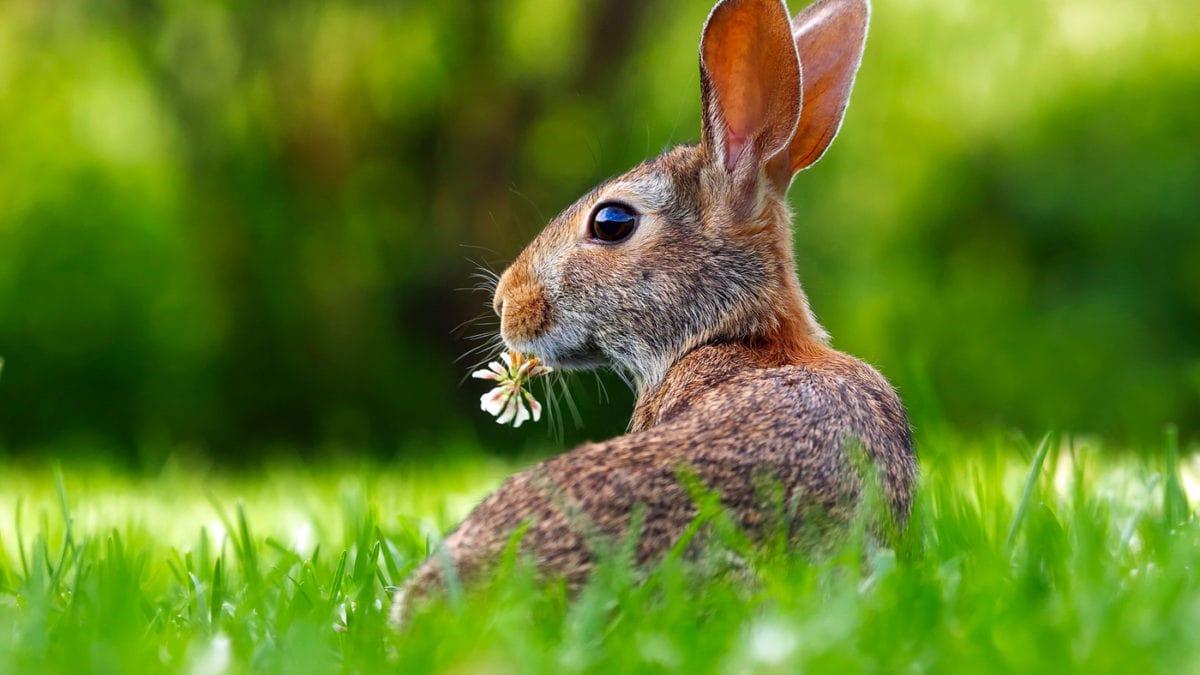 Frühling Und Ostern Dem Osterhasen Auf Der Spur Himbeer