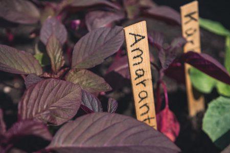 Urban Gardening Pasing Pflanzen // HIMBEER