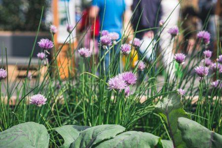 Urban Gardening Pasing Amaranth Pflanzen // HIMBEER