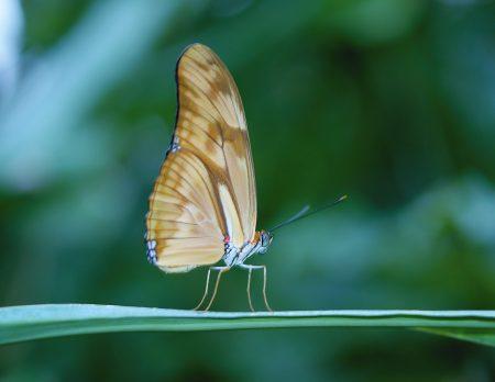 Essen wir in Zukunft Insekten? Biotopia gibt Antworten // HIMBEER