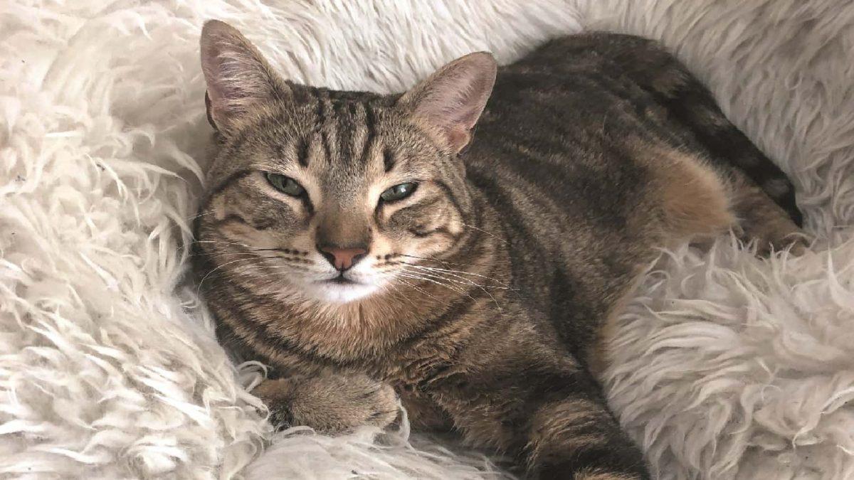 Katze Kinder lesen Katzen Vor Tierheim Muenchen // HIMBEER