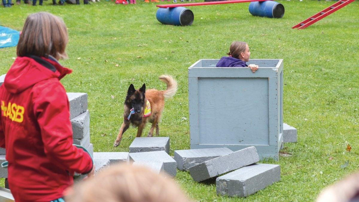 Isarinselfest Hundetraining // HIMBEER