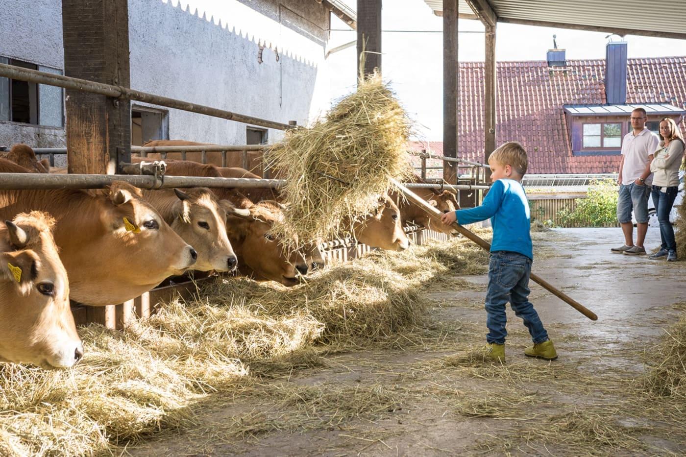 Bioerlebnistage Kind Kuh Stall // HIMBEER