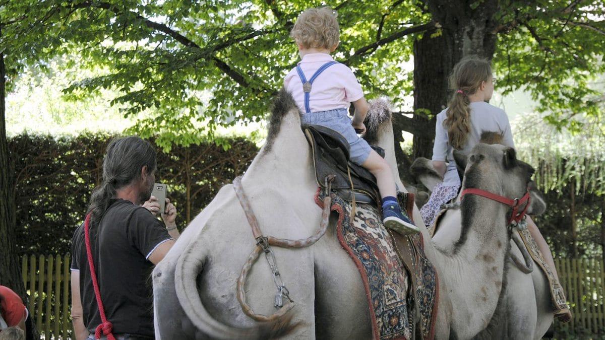 Waldgasthof Buchenhin Kamelreiten Sommerfest // HIMBEER