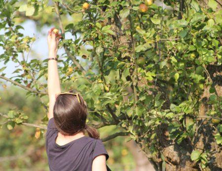 Apfel ernten Mundraub // HIMBEER