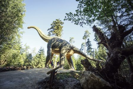 Raubdinosaurier Brachiosaurus Dinosaurier-Museeum // HIMBEER