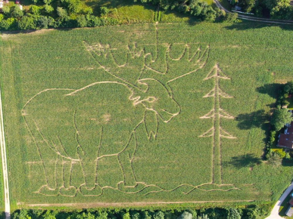 Labyrinthe – Ausflüge mit Kindern in München und Umland: Maislabyrinth in Radersdorf 2020 // HIMBEER