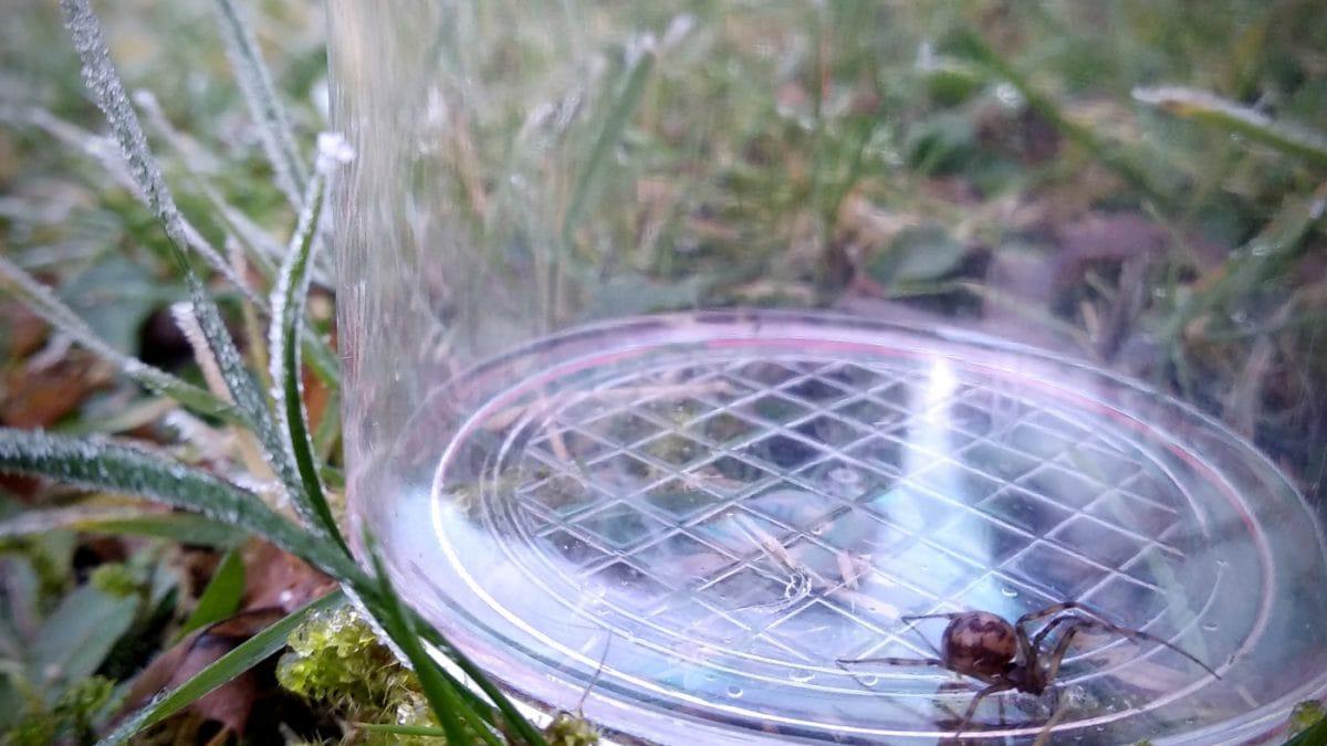 Spinnenaktionstag Spinne im Glas // HIMBEER