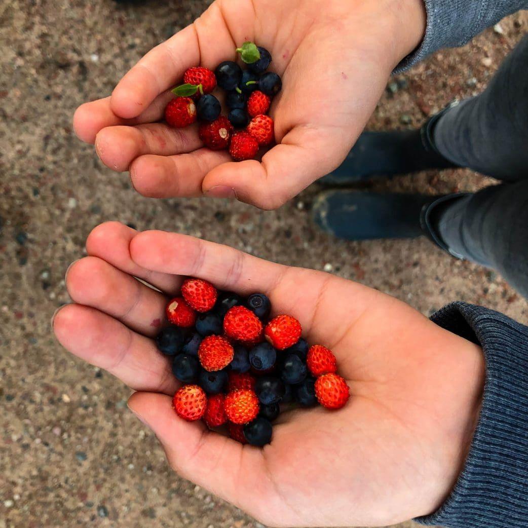 Urlaub mit Kindern in Schweden – Beeren sammeln // HIMBEER