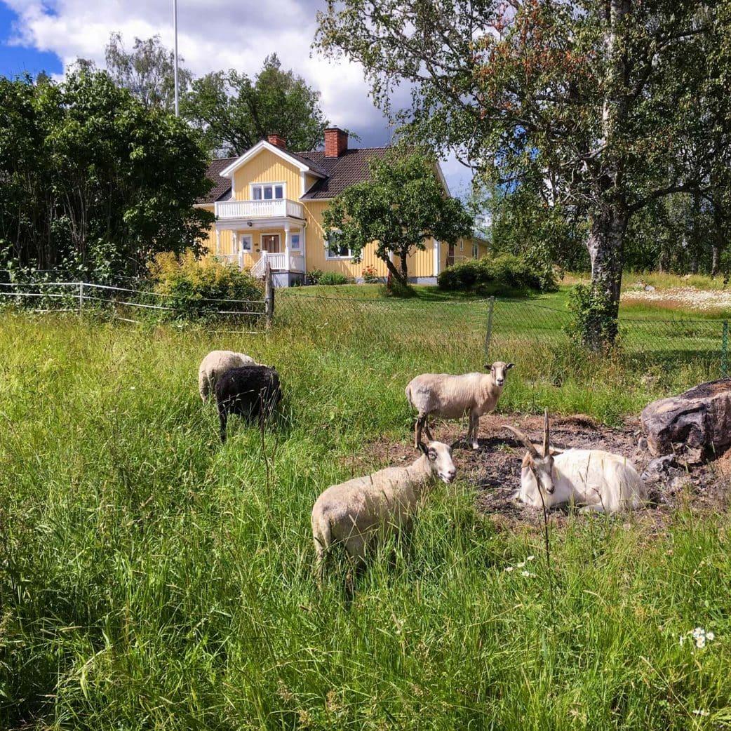 Urlaub mit Kindern in Schweden auf einem Bauernhof – Tiere streicheln und füttern // HIMBEER