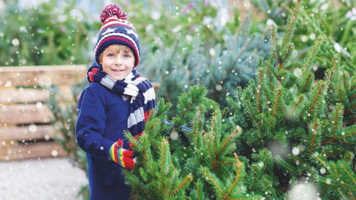 Weihnachten Tannenbaum Junge // HIMBEER