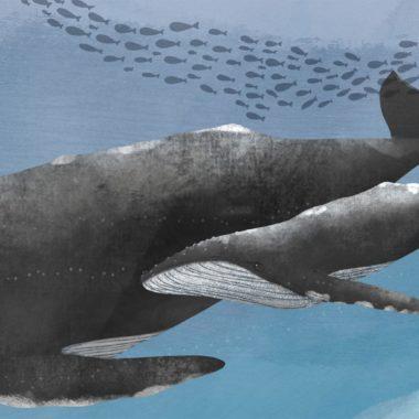 Kinderbuch-Tipp: Die Welt der Wale. Kindersachbuch // HIMBEER