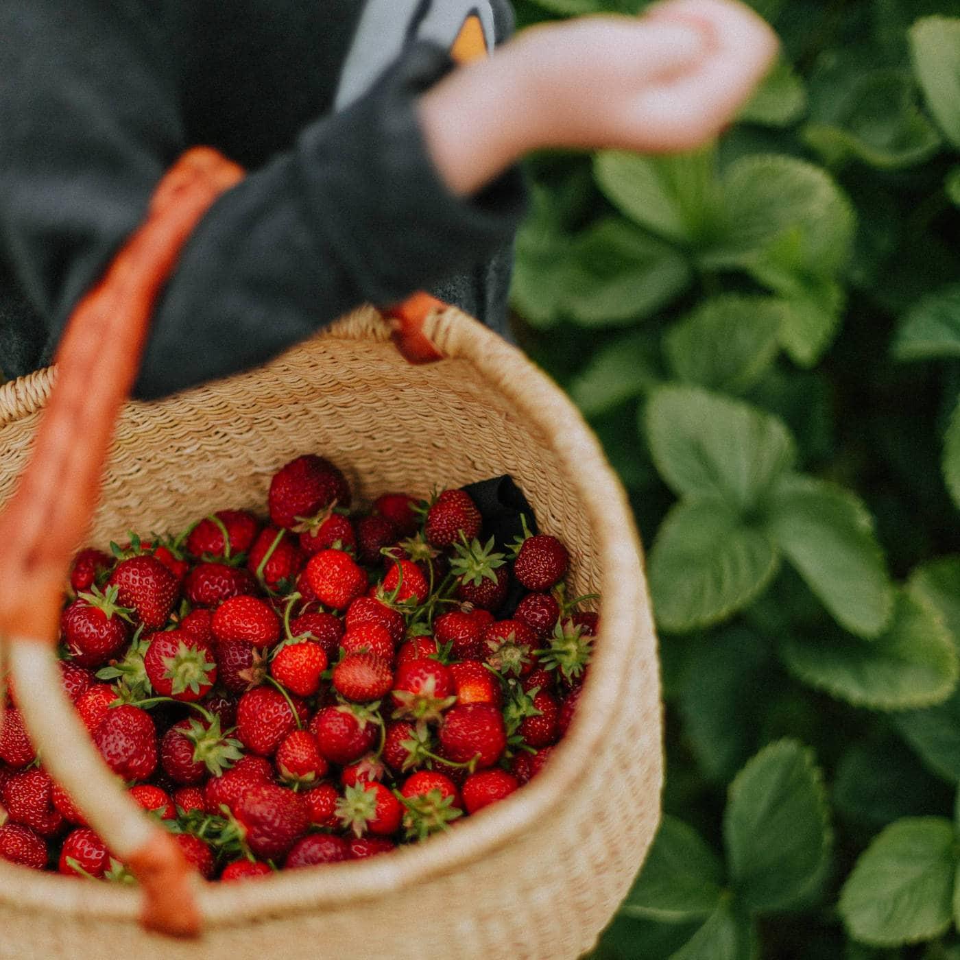 Erntezeit! Erdbeeren selber pflücken // HIMBEER