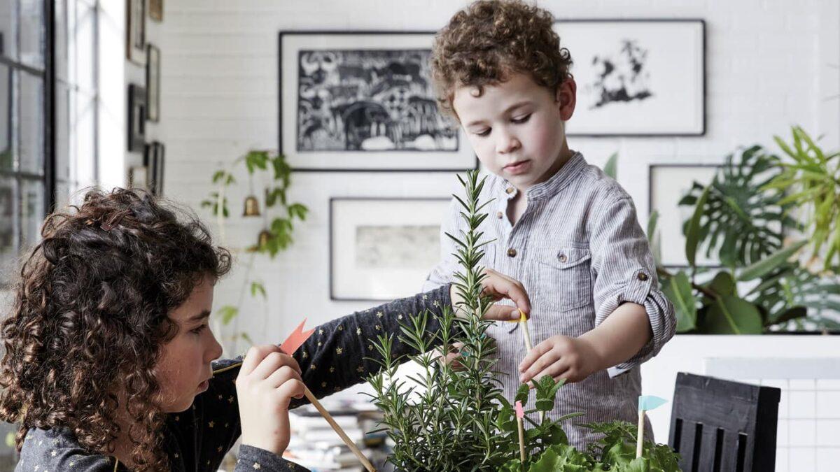 Pflanzideen für Kinder – Pflanzenfreunde // HIMBEER