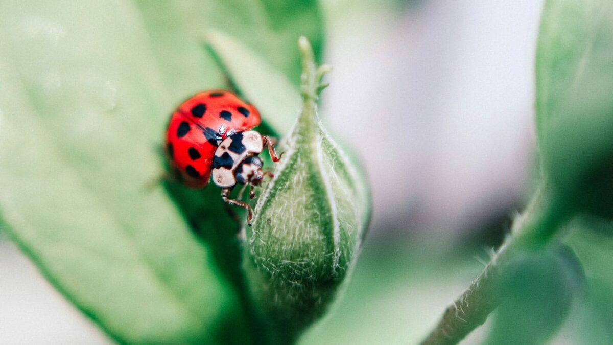 Fotowettbewerb für Kinder und Jugendliche in Bayern: Natur im Fokus // HIMBEER