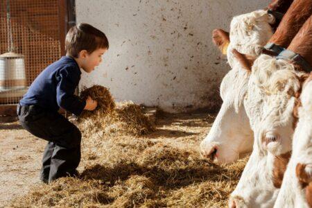Roter Hahn: Urlaub am Bauernhof in Südtirol // HIMBEER