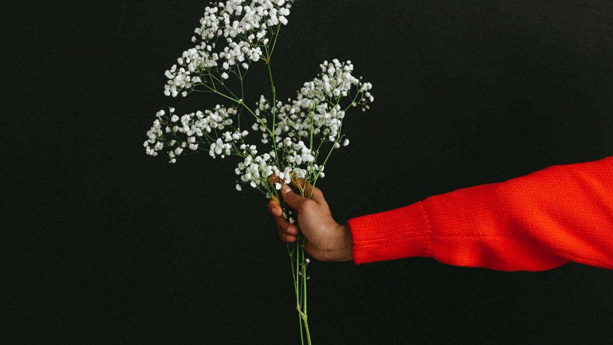 Blumen schenken zu jedem Anlass // HIMBEER