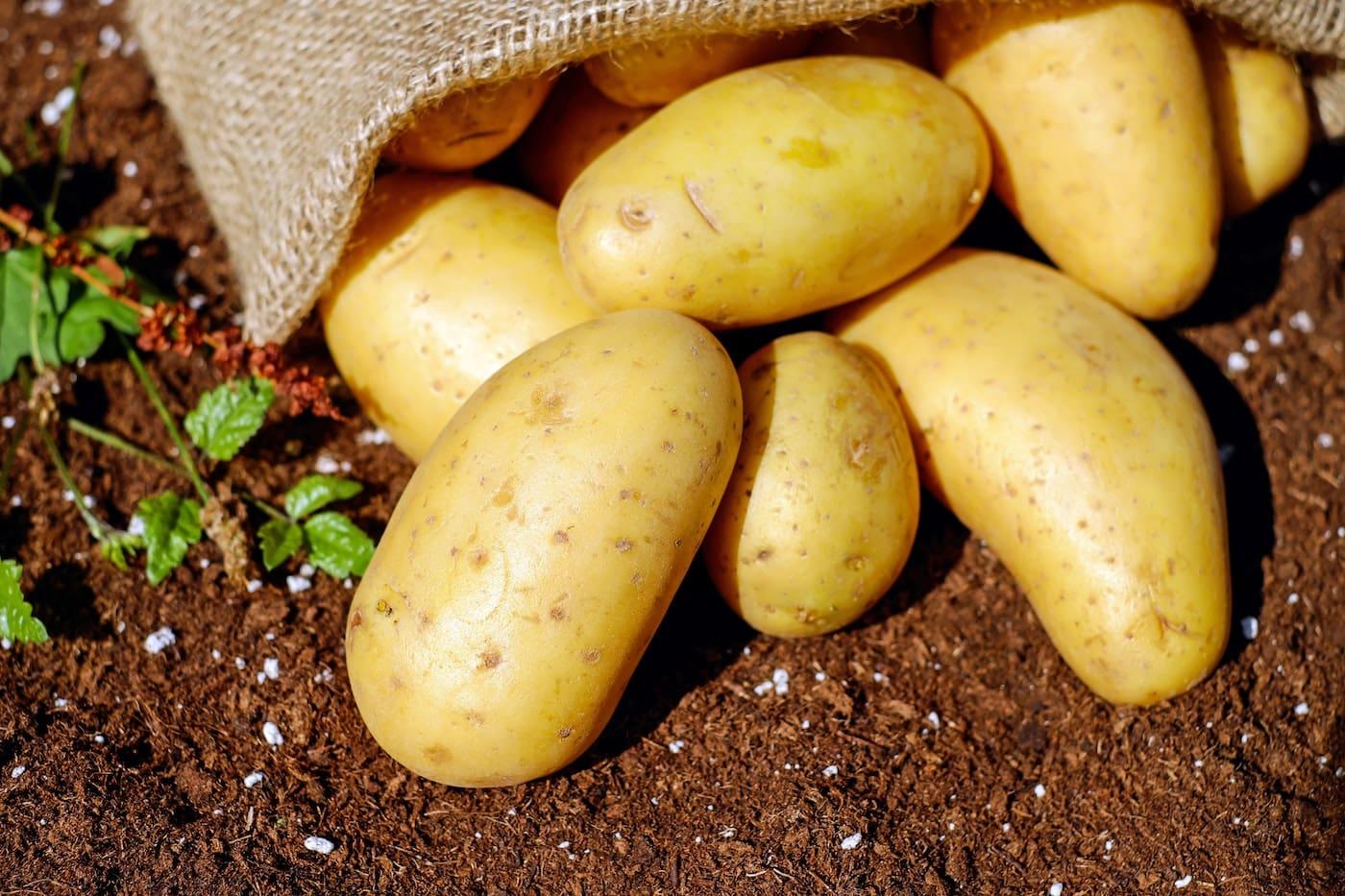 Kartoffeln für Dum Aloo Kartoffel-Curry // HIMBEER