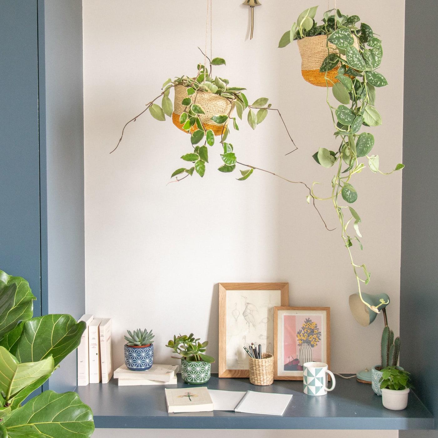 Lieblingssachen im Frühling: Pflanzen-Sets für zu Hause // HIMBEER