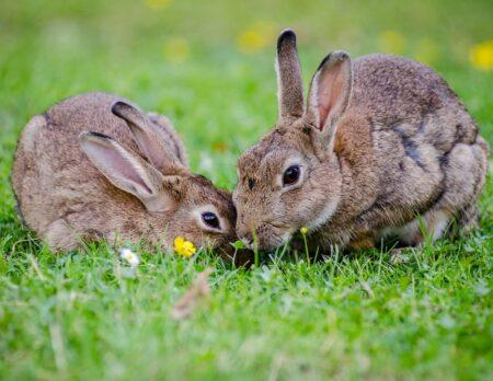 Ostern feiern mit Kindern: Osterhasen backen, basteln und Ostereier färben // HIMBEER