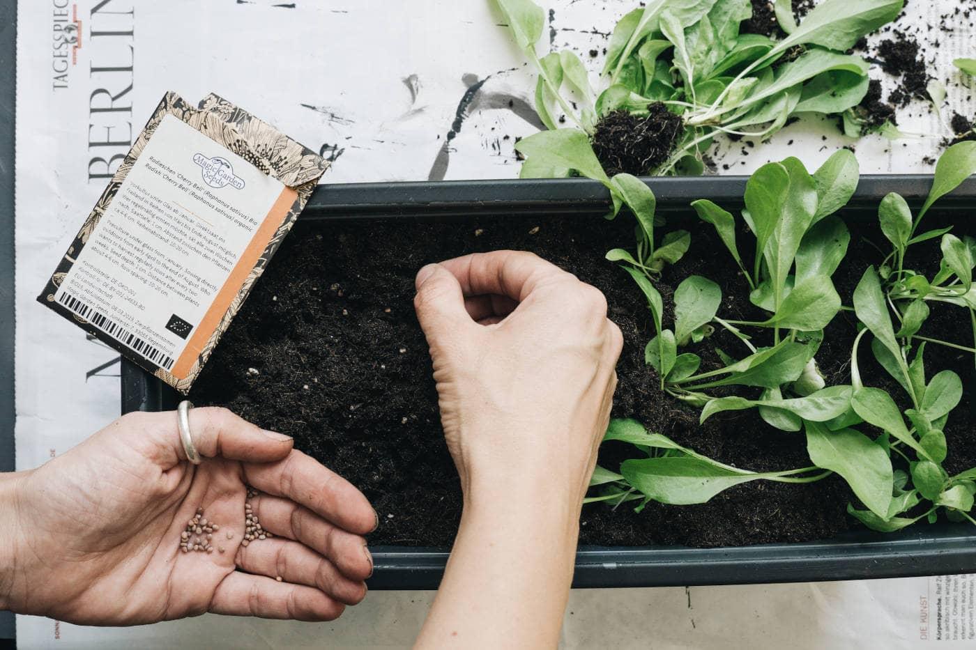 Pflanzkasten verschönern und bepflanzen – Schritt 4 // HIMBEER