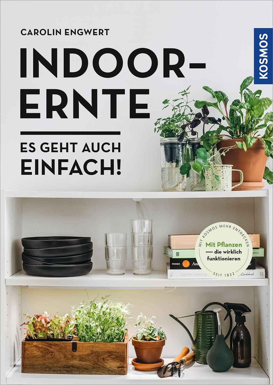 Pflanzkasten verschönern und bepflanzen aus Indoor-Ernte // HIMBEER