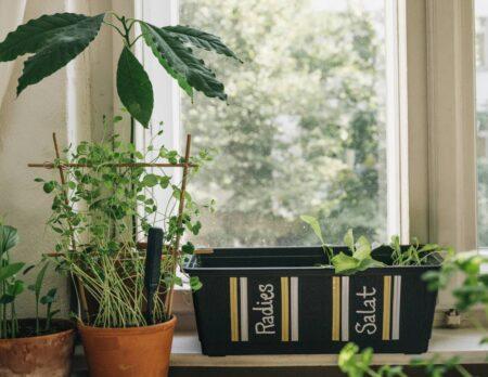 Pflanzkasten verschönern und bepflanzen // HIMBEER