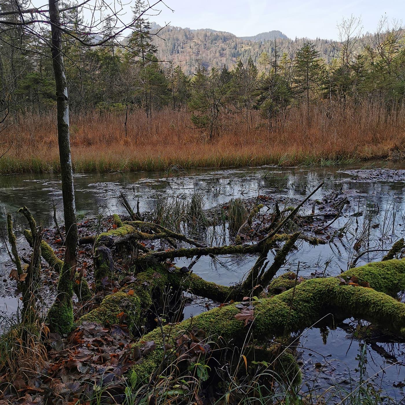 Sieben-Quellen-Sagenspaziergang: Sumpfgebiet // HIMBEER