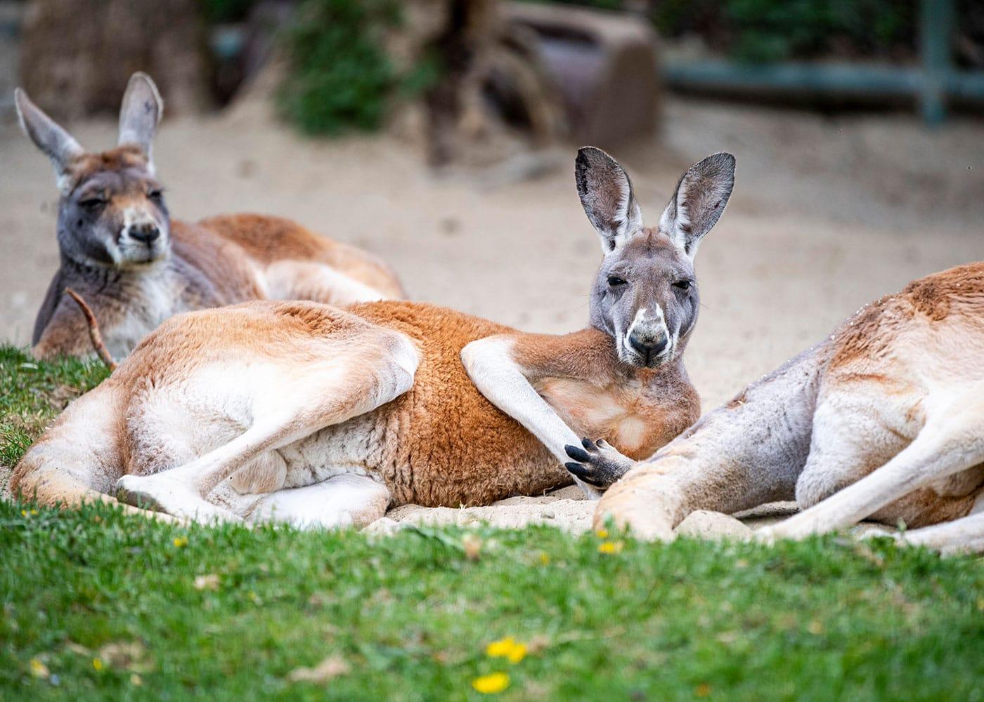 Sommerferien im Tierpark Hellabrunn in München // HIMBEER