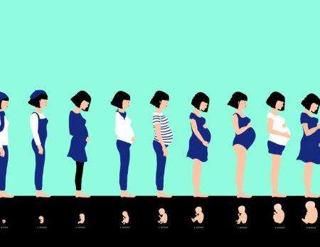 Kindersachbuch über Schwangerschaft: Ein neues Leben entsteht // HIMBEER